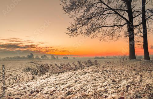 Tuinposter Beige Winter im Teufelsmoor bei Sonnenaufgang
