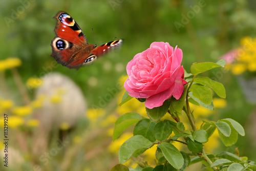 Fotobehang Oranje Schmetterling 410