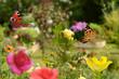 Quadro Schmetterling 419