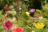Schmetterling 419