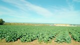 15123_Wide_agricultural_farm_with_some_crops.mov - 183299630