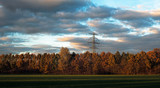 Orange colored autumn trees and electricity pole in low sunlight under cloudy sky.