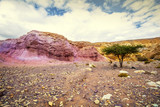 Desert with dry river watercourses and tree - 183306868