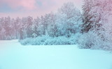Winter landscape. Xmas background with white snowflakes. Sunlight in the winter forest. Latvia - 183319088