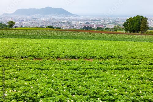 ジャガイモ畑と函館の街