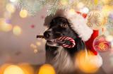 Black dog in santa cap - 183327686