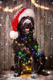 Black dog in santa cap - 183327804
