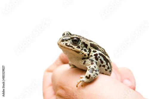 Fotobehang Kikker little frog