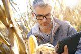 Agronomist in corn field testing quality of cereals - 183331853