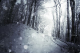 snowfall in winter forest - 183332834