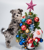 Puppy near Christmas tree - 183335637