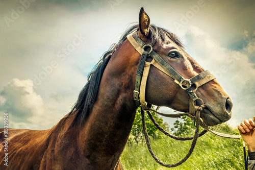 Plexiglas Paarden Racehorse. The jockey's hand stroking the horse's face. Sky background, toned.