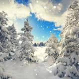 Winterwald zauberhaft - 183341234
