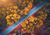 Aerial view of road in beautiful autumn forest at sunset. Beautiful landscape with empty rural road, trees with red and orange leaves. Highway through the park. Top view from flying drone. Nature - 183346646