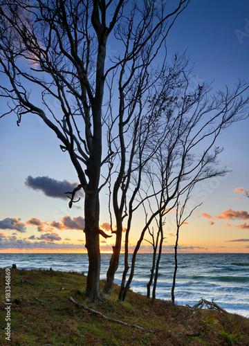 Küstenwald an der Ostsee bei Sonnenuntergang,  Darss, Weststrand Poster
