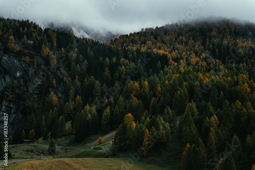 Moody capture of mountain forest with morning mist Poster