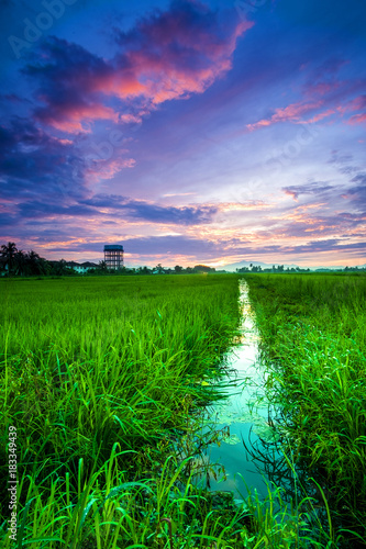 Staande foto Groene scenery of sunset at paddy field in Penang,Malaysia. Soft Focus,blur due to long exposure. Visible noise due to high ISO.