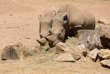 rhinoceros - 183357693