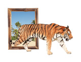 Tiger coming out of a bamboo frame with 3d effect