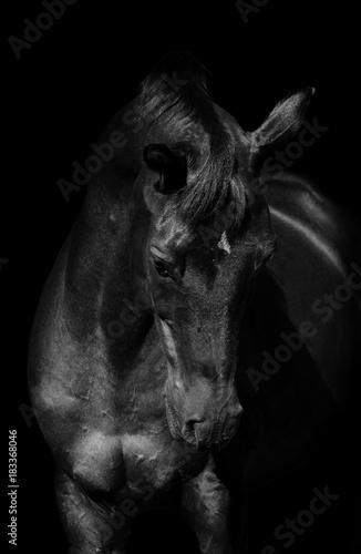 Plexiglas Paarden Black&black