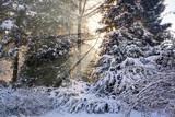 Sun beams in a snowy park - 183372446