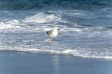 seagull on the beach - 183378420