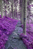 Fantasy colored forest. Purple tone corrected image. - 183382028
