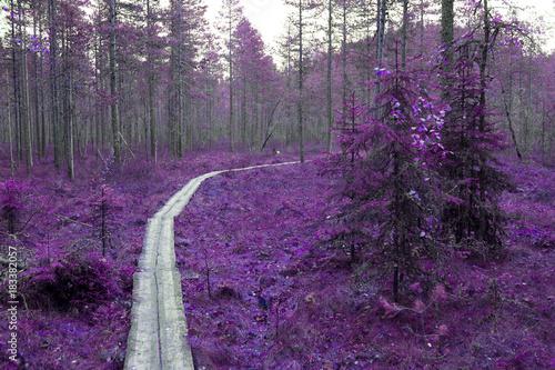 fioletowe-drzewa