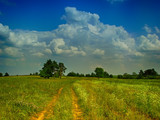 huge cumulus cloud on the field road summer pine in the distance rural landscape