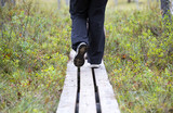 Person walking the duckboards in the Finnish forest, swamp area.  - 183384266