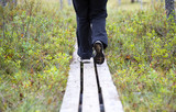 Person walking the duckboards in the Finnish forest, swamp area.  - 183384279