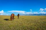 Horses by Song Kul lake - 183388624