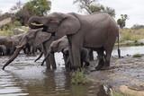 Elepants in Kruger National Park, South Africa