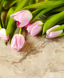Spring tulips on stone background, copy space