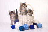 Cute Kittens With Balls of Yarn - 183438277