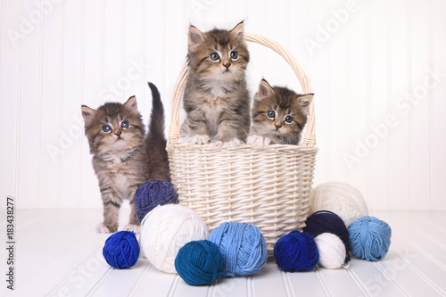 Obraz na płótnie Cute Kittens With Balls of Yarn