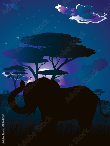 Foto op Canvas Zwart African Night with Elephant