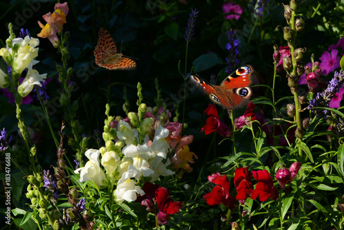 Fotobehang Zwart Schmetterling 403