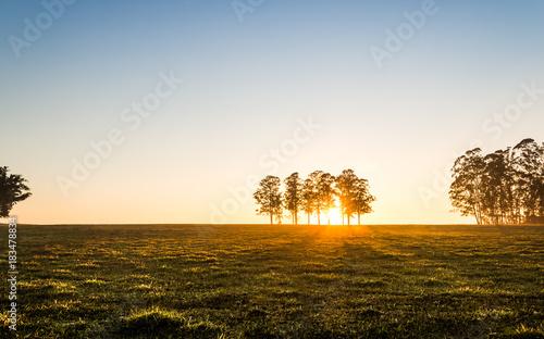 Plexiglas Zonsopgang Nascer do sol no campo