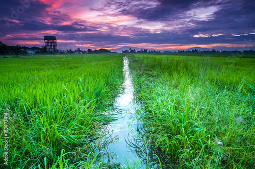 Poster Groene scenery of sunrise at Paddy Field in Penang,Malaysia. Soft focus,blur due to long exposure. visible noise due to high ISO