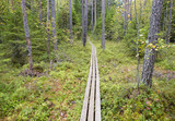 Walking and hiking path in the forest in Finland. Wooden duckboard in the coniferous autumnal forest in Finland. - 183500603