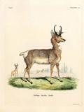 Illustration of an antelope. - 183504298