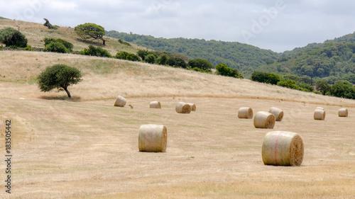 Deurstickers Beige Harvest in Sardinia