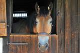Pferd im Stall - 183509238