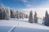 Winter landscape with footpath in the snow - 183513417