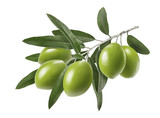 Long olive branch isolated on white background