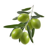 Green olive branch isolated on white background - 183517021