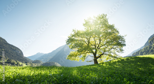 Foto op Canvas Gras Idyllic landscape in the Alps, tree, grass and mountains, Switzerland