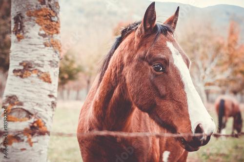 Plexiglas Paarden cavallo in primo piano