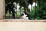 Greek cat washes. Athens.Streets of Greece. - 183525259
